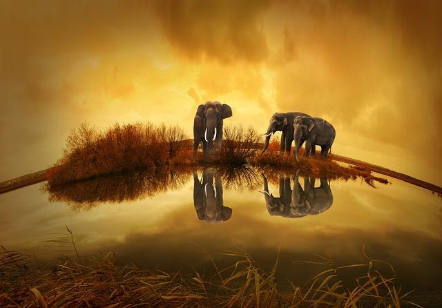 חיות בחלום - פילים