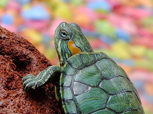 turtle-182121_640