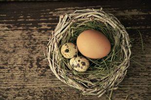 egg-1272815_640