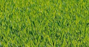 grass-1088114_640