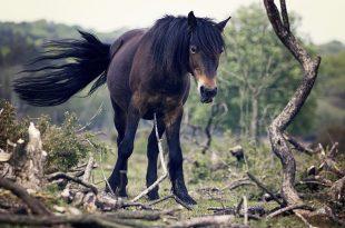 horse-692128_640