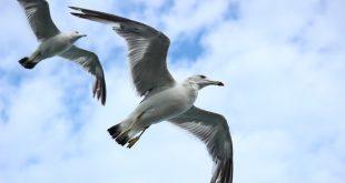 seagull-623520_640